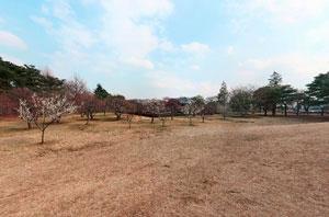 野川公園梅林
