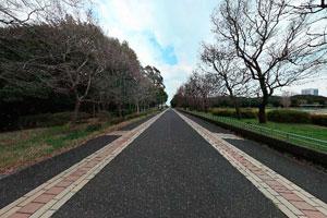 夢の島公園 園内通路