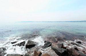 猿島三本松