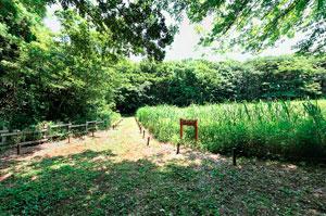 野津田公園こもれびの路