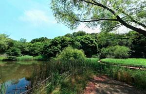 野津田公園湿性植物園