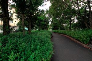 公園北通り
