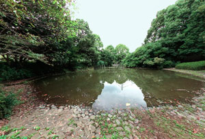 瓜生緑地北の池