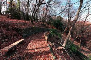 薬師池公園雑木林