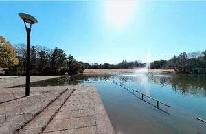 多摩中央公園大池