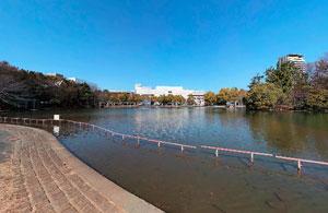 多摩中央公園芝生広場