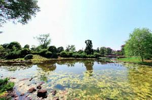 昭和記念公園 こもれびの池