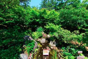 昭和記念公園日本庭園 東の流れ