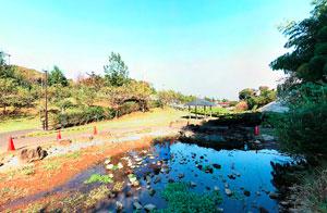 若葉台公園 池