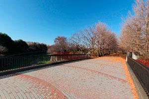 昭和記念公園いちょう橋