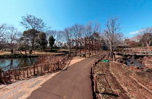 郷土の森博物館安らぎの池